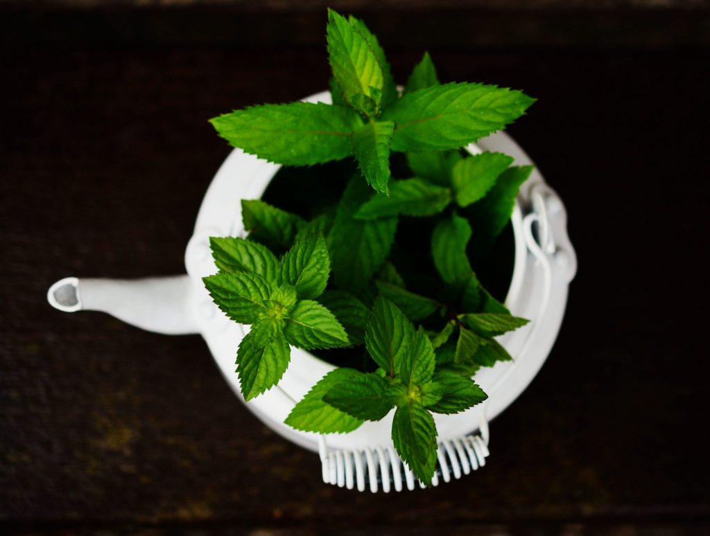 Effect Peppermint on Oral Halitosis Treatment